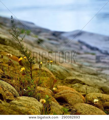 Litle Grass Growing On A Rocky Slope