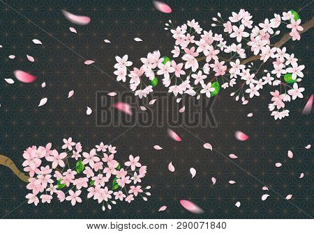 Pink Sakura Flower On Black Retro Background. Cherry Blossom Viewing Party At Night.