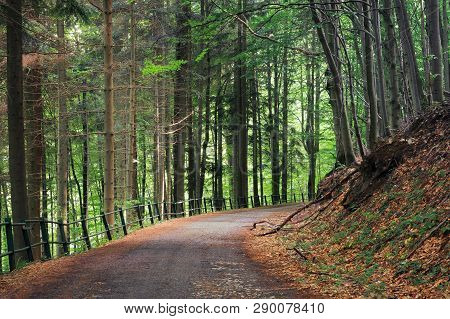 Old Asphalt Road Through Beech And Conifer Forest.  Beautiful Summer Scenery. Broken Metal Fence Alo
