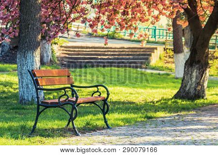 Bench In The City Park Among Pink Cherry Blossom. Beautiful Urban Scenery In Springtime. Paved Walki