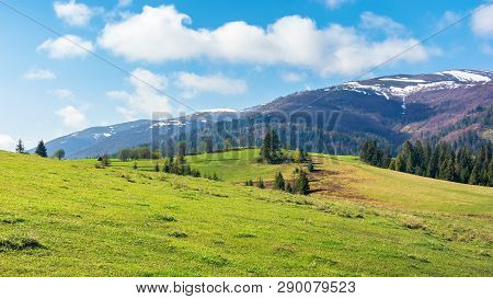 Beautiful Springtime Landscape In Mountains. Spruce Trees On The Grassy Hills. Spots Of Snow On The