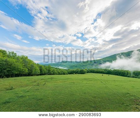 Summer Countryside In Mountains. Fog Rising Behind The Grassy Meadow Among The Forest. Cloudy Mornin