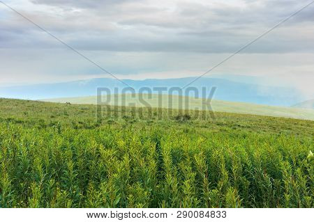 Grassy Alpine Meadow In Mountains. Ridge Slightly Visible In The Distance Through Fog