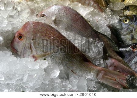 fish ice seafood market food traditional indigenous cooking asian poster