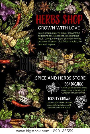 Herbs, Condiments And Spices Store Vector. Seasoning Ginger And Basil, Dill, Parsley, Bay Leaves And