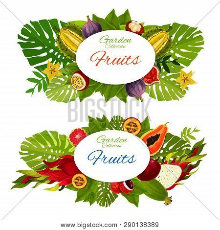 Exotic Vector Fruits And Green Palm Leaves. Tropical Guava, Juicy Mangosteen, Passion Fruit And Papa