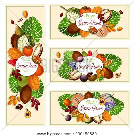 Exotic Fruits, Garden Harvest And Food Banners. Vector Caimito And Kiwano, Miracle Fruit And Kumquat