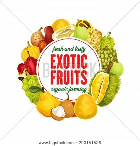 Exotic Fruits Banner, Organic Farming, Healthy Nutrition. Vector Marindo Or Noni, Durian And Sala, M