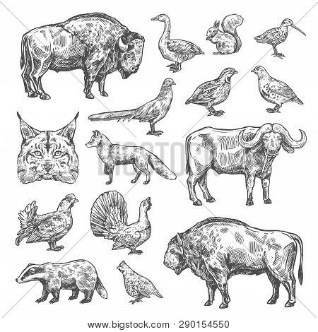Hunting Sport, Birds And Animals Isolated Sketches. Vector Lynx And Buffalo, Hazel Grouse And Partri