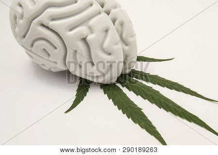 The Figure Of The Human Brain Lies On A Green Leaf Of Hemp. The Use Of Cannabis (medical Marijuana)