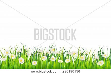 Spring Field Of Flowers Of Daisies, Chamomile And Green Juicy Grass, Meadow. Vector, Illustration, I