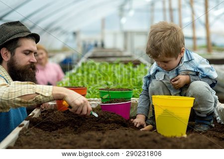 Grow Green Plant. Father And Son Grow Green Plant. Happy Family Grow Green Plant In Greenhouse. Grow