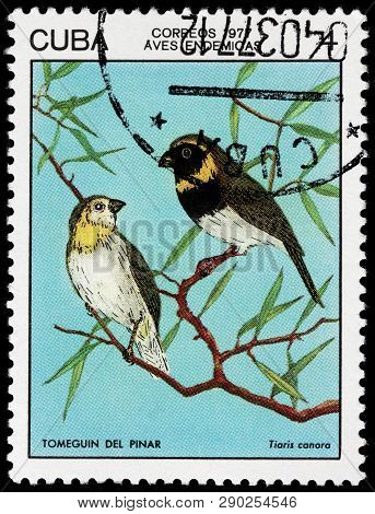 Luga, Russia - February 17, 2019: A Stamp Printed By Cuba Shows Cuban Grassquit - A Small Bird. It I