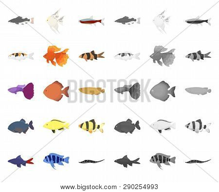Different Types Of Fish Cartoon, Mono Icons In Set Collection For Design. Marine And Aquarium Fish V