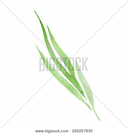 Green Leaf. Leaf Plant Botanical Garden Floral Foliage. Watercolor Background Set. Isolated Leaves I