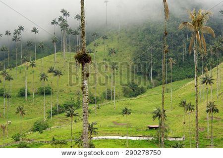 Cloudy landscape on Cocora valley in Cordiliera Central, Salento, Colombia, South America