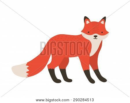 Funny Furry Little Fox. Adorable Lovely Fluffy Forest Carnivorous Animal Isolated On White Backgroun