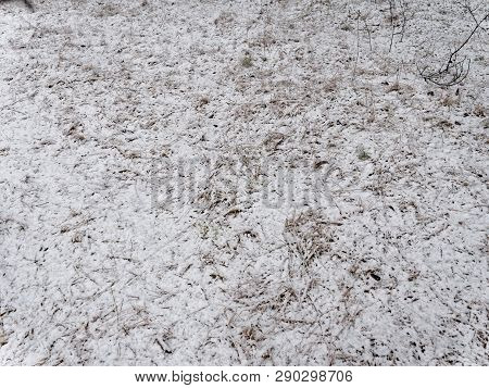 Spring. Grass Covered With Snow. Background Texture.
