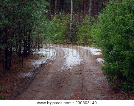 First Snow On A Path In The Dark Forest.