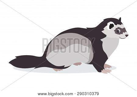 Cute Gray Ferret Icon Isolated On White Background, Small Fluffy Pet, Domestic Animal, Vector Illust