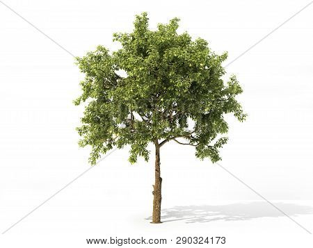Realistic Apple Tree Full Of Leaves Isolated On A White. 3d Illustration