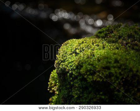 Beautiful Green Moss On The Floor, Moss Closeup, Macro. Beautiful Background Of Moss For Wallpaper.