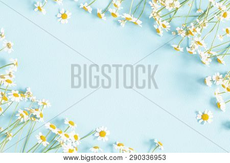 Flowers Composition. Chamomile Flowers On Pastel Blue Background. Spring, Summer Concept. Flat Lay,