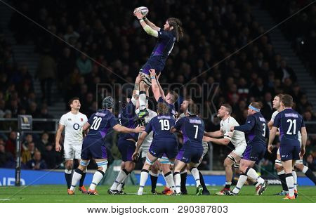 LONDON, ENGLAND - MARCH 16 2019: Ben Toolis of Scotland wins the ball in a lineout during the Guinness Six Nations match between England and Scotland at Twickenham Stadium.