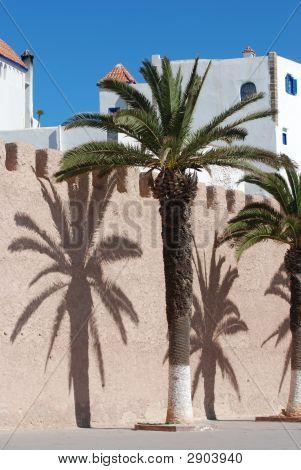 Tropical Palm Shadows