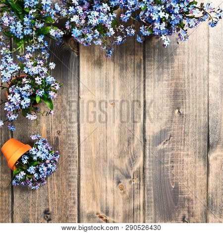 Forgetmenot Spring Flower On Wooden Background. Bunch Of Small Blue Forget Me Not Flowers With Flowe