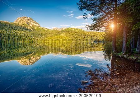 Perfect view of Black lake. Location place National park Durmitor, village Zabljak, Montenegro, Balkans, Europe. Scenic image of unusual summer scene in sunny day. Discover the beauty of earth.