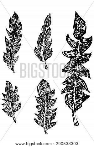 Simple Five Model Of Black And White Animal Feather, For Element Design.
