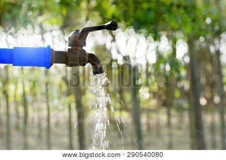 Water Valve On Green Nature Background, Close Up Tap Valve With Blur Background Of Green Tree, Water