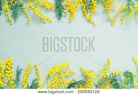 Spring background. Mimosa spring flowers on the green wooden background, festive background for spring holidays
