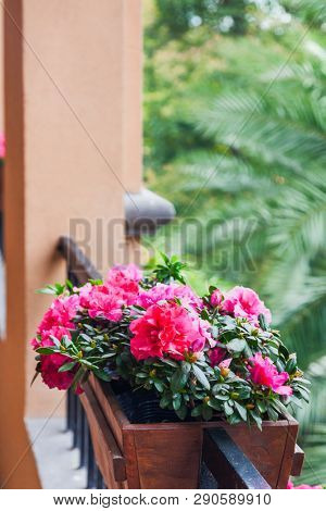Street decoration with plants and flower,Potted flowers of pink azalea on the wooden  balustrade with green palm trees background. Fuzhou,China