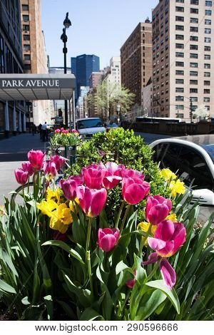 NEW YORK, NY, USA - APRI 22, 2015: Tulips on Park Avenue in NYC during spring season seen.