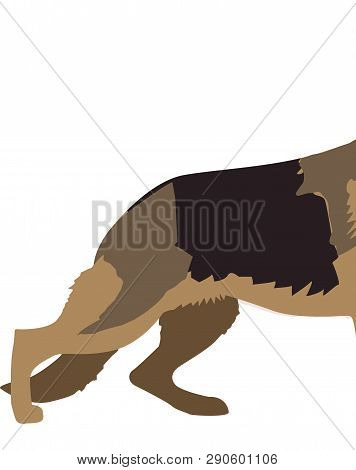 German Shepard Dog Breed, Drawn, Isolated On White, Vector Illustration
