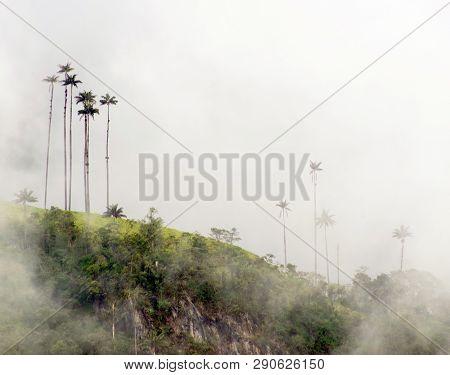 Misty alpine landscape of Cocora valley, Salento, Colombia, South America