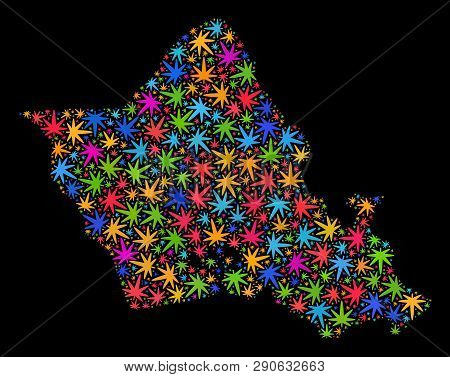 Bright Vector Cannabis Oahu Island Map Mosaic On A Black Background. Template With Bright Weed Leave