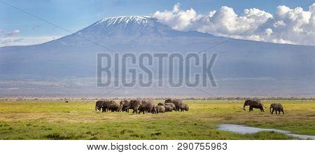 Panorama of Mount Kilimanjaro with a herd of elephants walking across the foreground. Amboseli national park, Kenya.