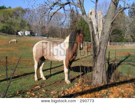 Horseinfieldbytree
