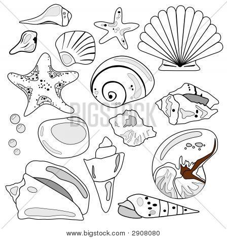 Sea Shell Collection.Eps
