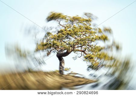 Tree With Radiant Power In The Vortex On A Hill