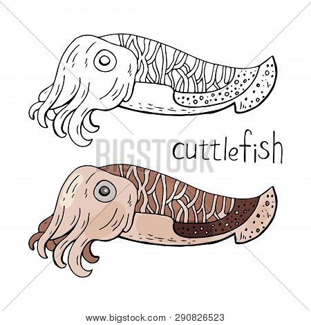 Cuttlefish Black And White And Color Isolated On White Background.