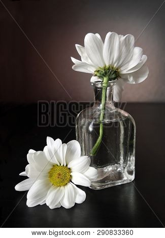 Still Life With Two White Daisy Flowers In The Small Vintage Glass Botlle Against A Low Key Backgrou