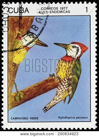 Luga, Russia - February 17, 2019: A Stamp Printed By Cuba Shows  Cuban Green Woodpecker - A Species