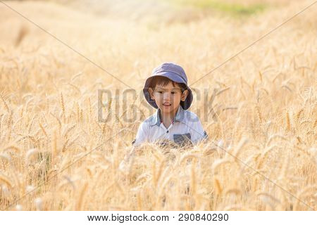 Asian Boy Having Fun And Playing In A Wheat Field On Summer.