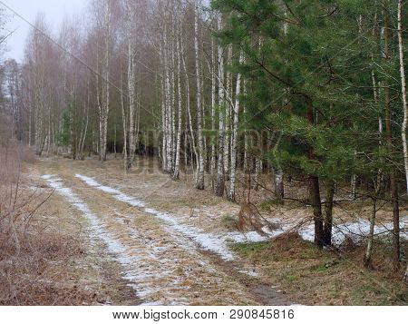 The First Snow Covered The Ground In Birch.