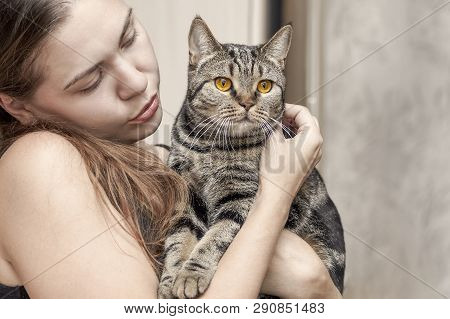 Young Caucasian Woman Holds British Short Hair Cat With Bright Yellow Eyes, Embracing It. Tebby Colo