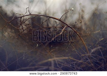 Abstract Blurred Dark Background With Curly And Impassable Wet Twigs Of Bushes In The Autumn Foggy T